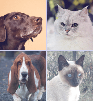 pets dataset download
